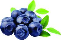 Billberries
